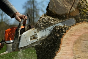 Stump Grinding Services Indiana