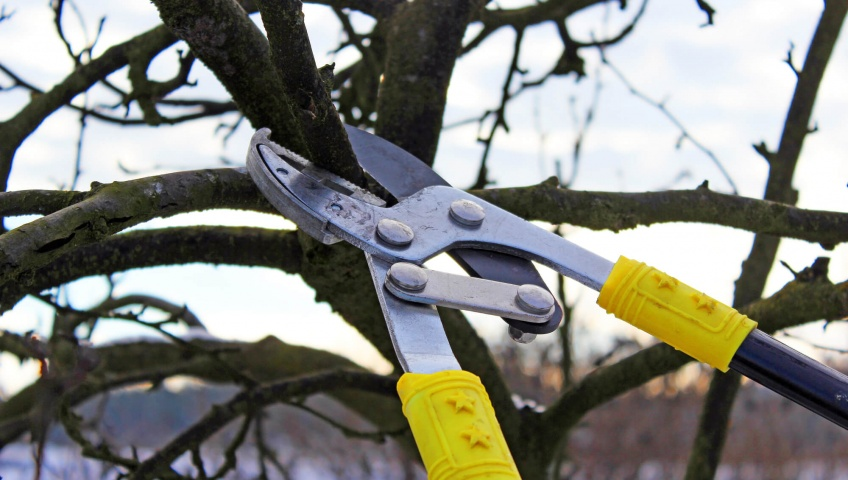 Things To Do And Avoid When Pruning Trees