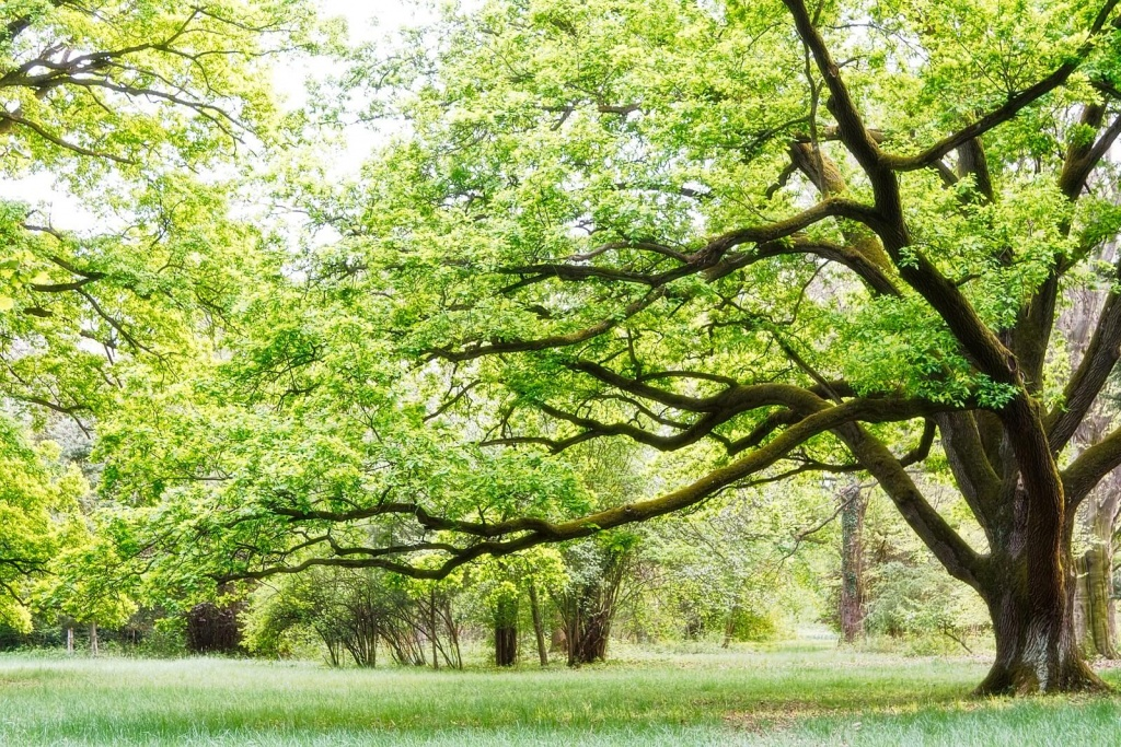How To Keep Your Trees in Good Health