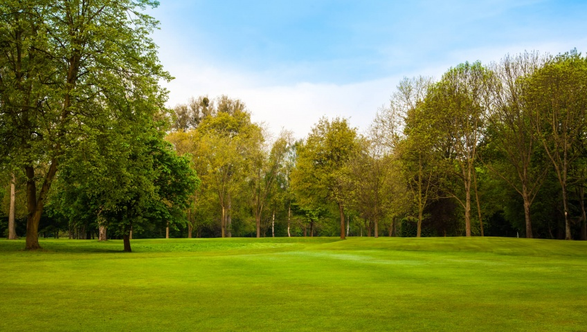 Tips How To Keep Your Trees Healthy
