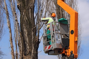 Tree Pruning Services Charlestown Indiana