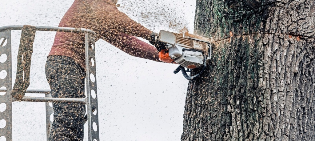 How Tree Services Reduce Allergens in Your Yard