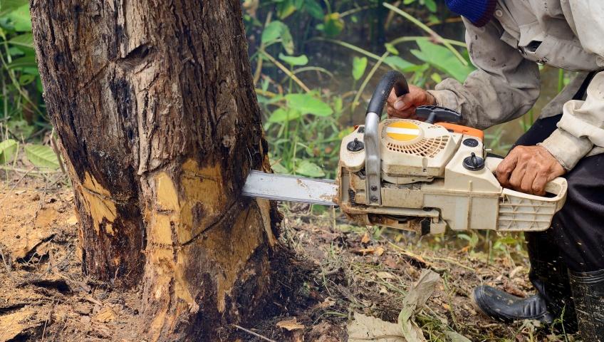 Proper Tree Cutting Procedures