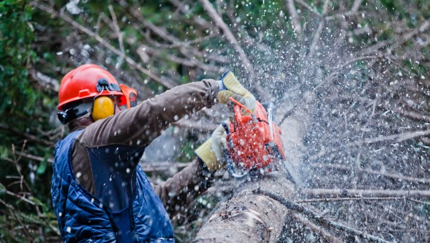 Looking for a Professional to Trim Your Trees