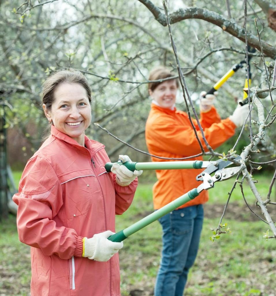 Tree Service Specialist Louisville, KY