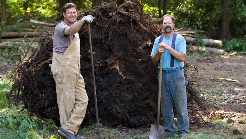How to get rid of tree stumps