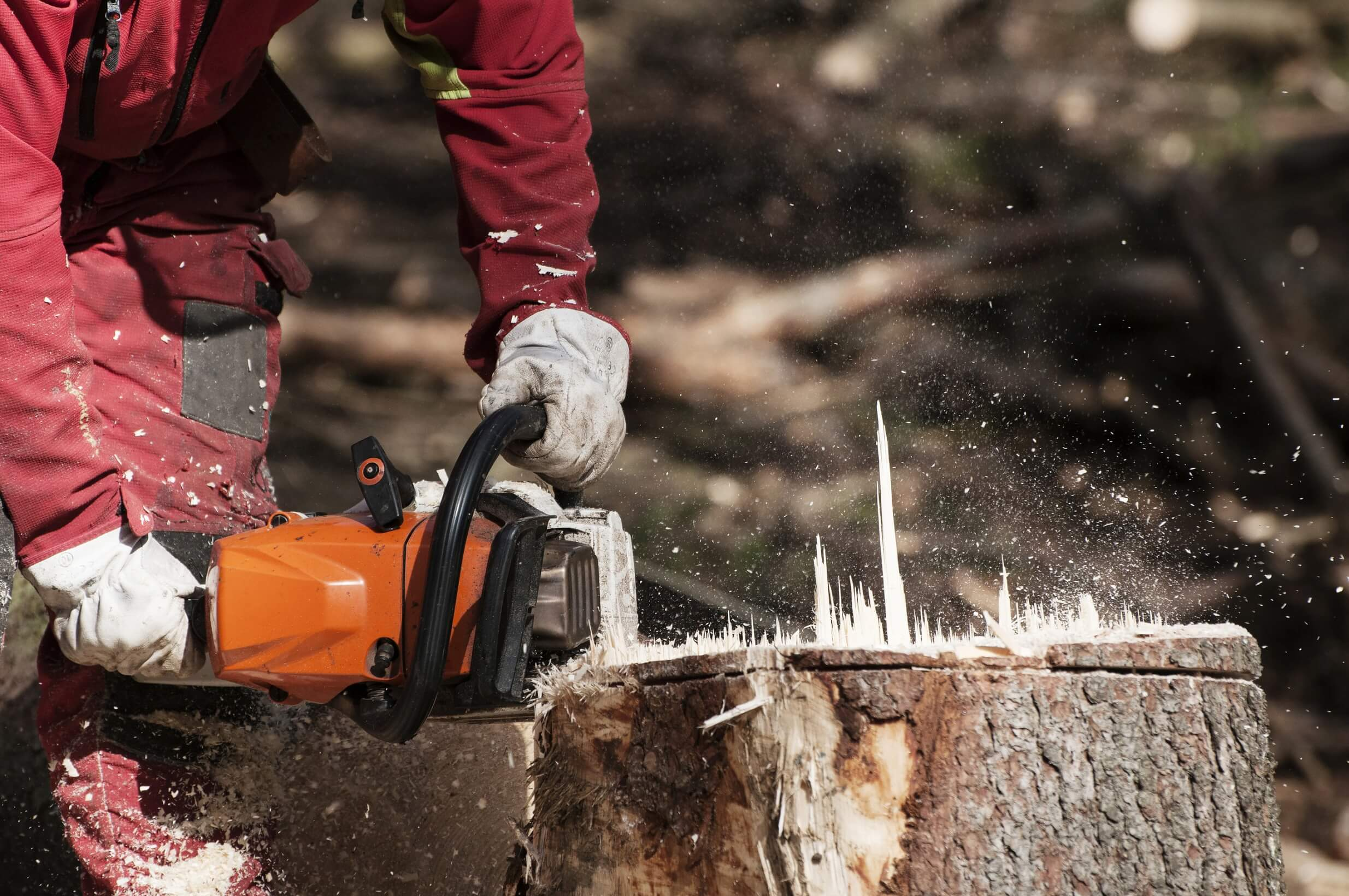 Tree Stump Removal Services in Indiana