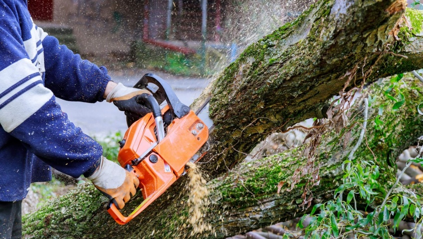 When to Get a Tree Removed Indiana